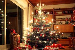 Weihnachtsbaum panther Carina Hansen
