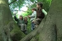 Waldgruppe - 20090708
