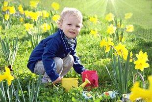 Junge Frühling Osterglocken