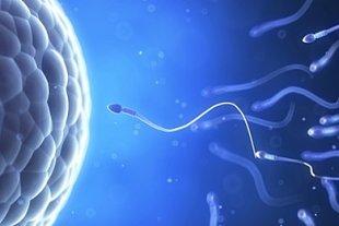 Spermium Eizelle Meldung