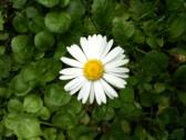 Profilbild von bali-h