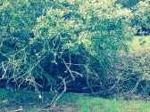 Profilbild von olive-blume
