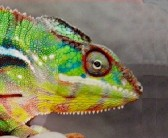 Profilbild von chamaeleon15