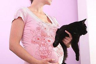 Frau schwanger Katze