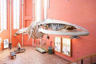 Meeresmuseum
